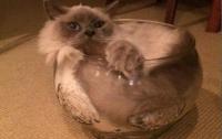 Коты - это жидкость: в Гарварде вручили Шнобелевские премии