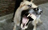 На Киевщине собаки насмерть загрызли воина АТО на глазах у дочери