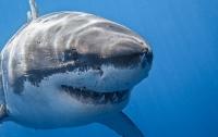 Туриста из Чехии съела акула в Египте