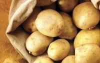 Зараженный картофель приехал в Украину из Нидерландов