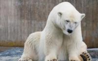 300 тысяч человек просят спасти самого грустного медведя (ФОТО)