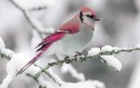 Новый год со снегом: синоптики рассказали, какой будет зима в Украине