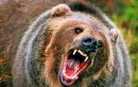 На российской турбазе медведь напал на женщину