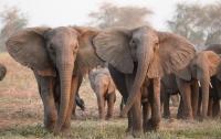 Слоны вышли из-под контроля и растоптали 18 человек во время фестиваля