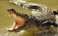 Крокодил съел женщину во время религиозного омовения