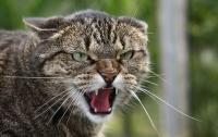 Двух жительниц Полтавщины покусали коты