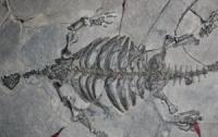 Археологи знайшли предка черепахи з ребрами і дзьобом (ФОТО)