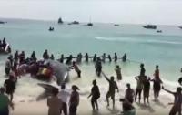 В Бразилии сутки спасали выброшенного на пляж кита (видео)
