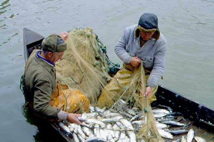 можно ловить рыбу в ульяновске