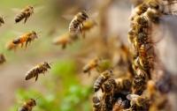 В США агрессивные пчелы захватили город