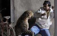 Леопард 12 часов охотился на жителей деревни (видео)