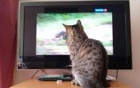Нацсовет по телерадиовещанию «прижал» «Волю-кабель»