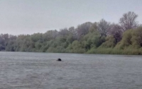На Дунае всплыли сразу несколько мощных мин