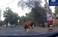 Одесские полицейские остановили в городе на скаку лошадь