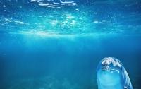 Дельфина с мутацией нашли в Крыму (фото)