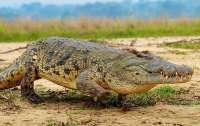 Редкого крокодила застрелили в зоопарке Швейцарии