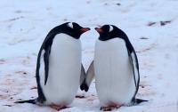 В Новой Зеландии украли голубых пингвинов
