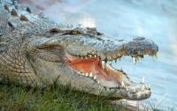 Американец нырнул в пруд к аллигатору, чтобы поиграть (видео)