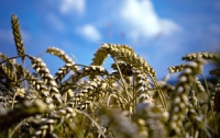 Чиновники будут рассказывать предпринимателям о том, как правильно вести агробизнес