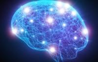 Ученые узнали, что заставляет мозг засыпать и просыпаться