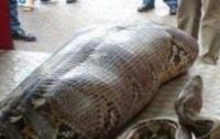 Чудом выжила: в Индонезии питон проглотил женщину (видео)