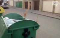 Одессит за 4 недели до Нового года выбросил прошлогоднюю елку