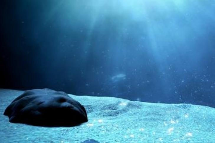 Ученые отыскали животное, укоторого есть голова инет тела