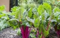 Какие мифы существуют об органических овощах и фруктах