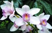 Киевлянам предлагают посмотреть на орхидеи