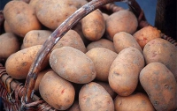 Самый дешевый картофель продают в Тернопольской области, – Минэкономики