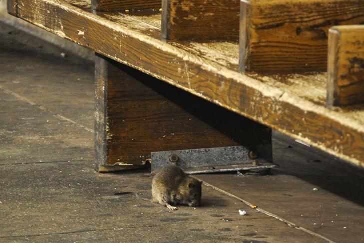 НаМадагаскаре бушует чума