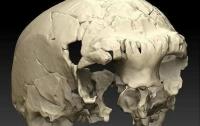 В португальской пещере найден череп возрастом 400 000 лет