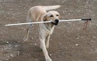 В Киеве живодеры отравили собаку-поводыря незрячего инвалида