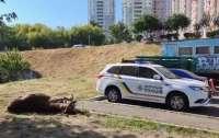 В Киеве насмерть сбили лося (видео)