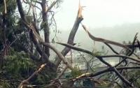 На детский лагерь в Германии обрушился ураган, есть жертвы