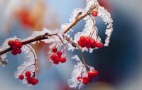 Ударят ночные морозы: украинцев предупредили о похолодании