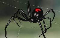 Мужчина съел двух живых пауков ради работы