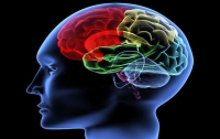 Ученые обнаружили гормон, который возбуждает мозг