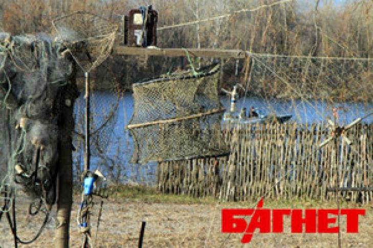 клев рыбы в черновицкой области