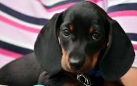 В Кривом Роге мужчина избил щенка на глазах у детей