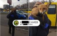 Киевляне наблюдали необычного зверя в спальном районе