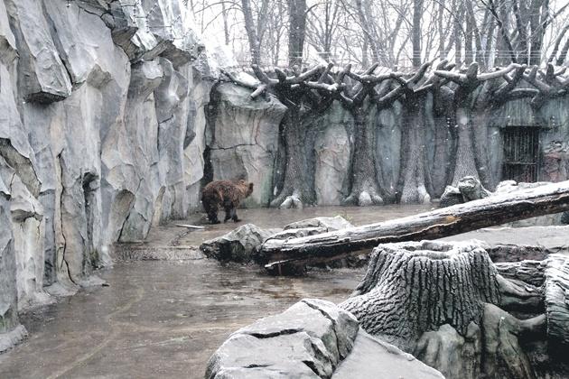 Как зимуют обитатели водоемов картинки