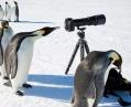 На станцию Украины в Антарктиде напали пингвины