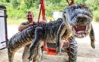 У аллигатора в животе обнаружили невероятную находку (фото)