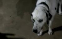 Пес спас семью от ядовитой змеи ценой своей жизни