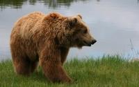 Голодный медведь напал на туриста в пекинском парке