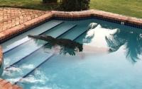 На сотрудника гостиницы в бассейне напал крокодил