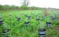 Во Львовской области прокуроры нашли плантацию конопли
