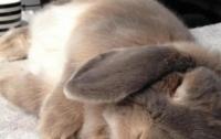 Ученые выяснили как лучше спать, чтоб дольше жить