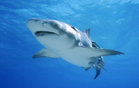 Акулы атаковали съемочную группу BBC (видео)